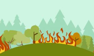 BPBD Kewalahan Memadamkan Kebakaran Di Gunung Ciremai