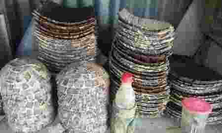 Melihat Kerajinan Tempat Buah Yang Terbuat Dari Kerang Di Denpasar